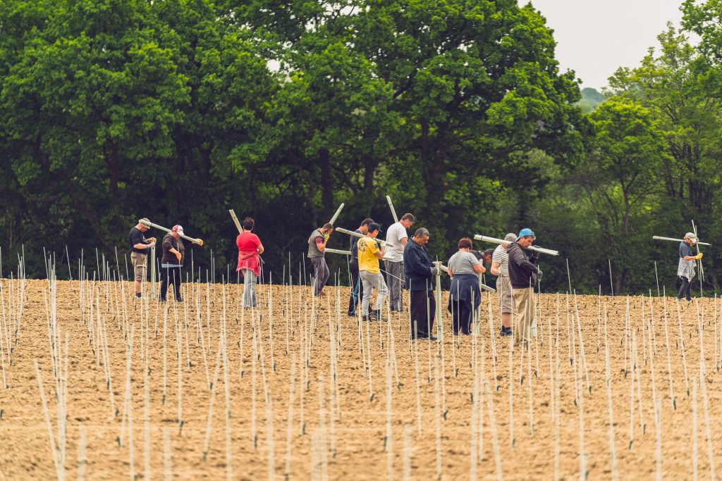 Vineyard workers installing rods and tubes.